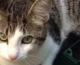 La directrice de Defacto cherche son chat