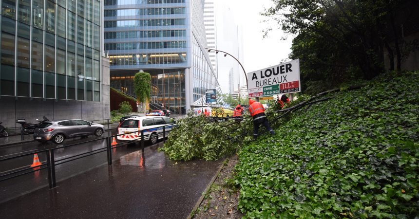 Un petit arbre chute sur le trottoir du boulevard circulaire