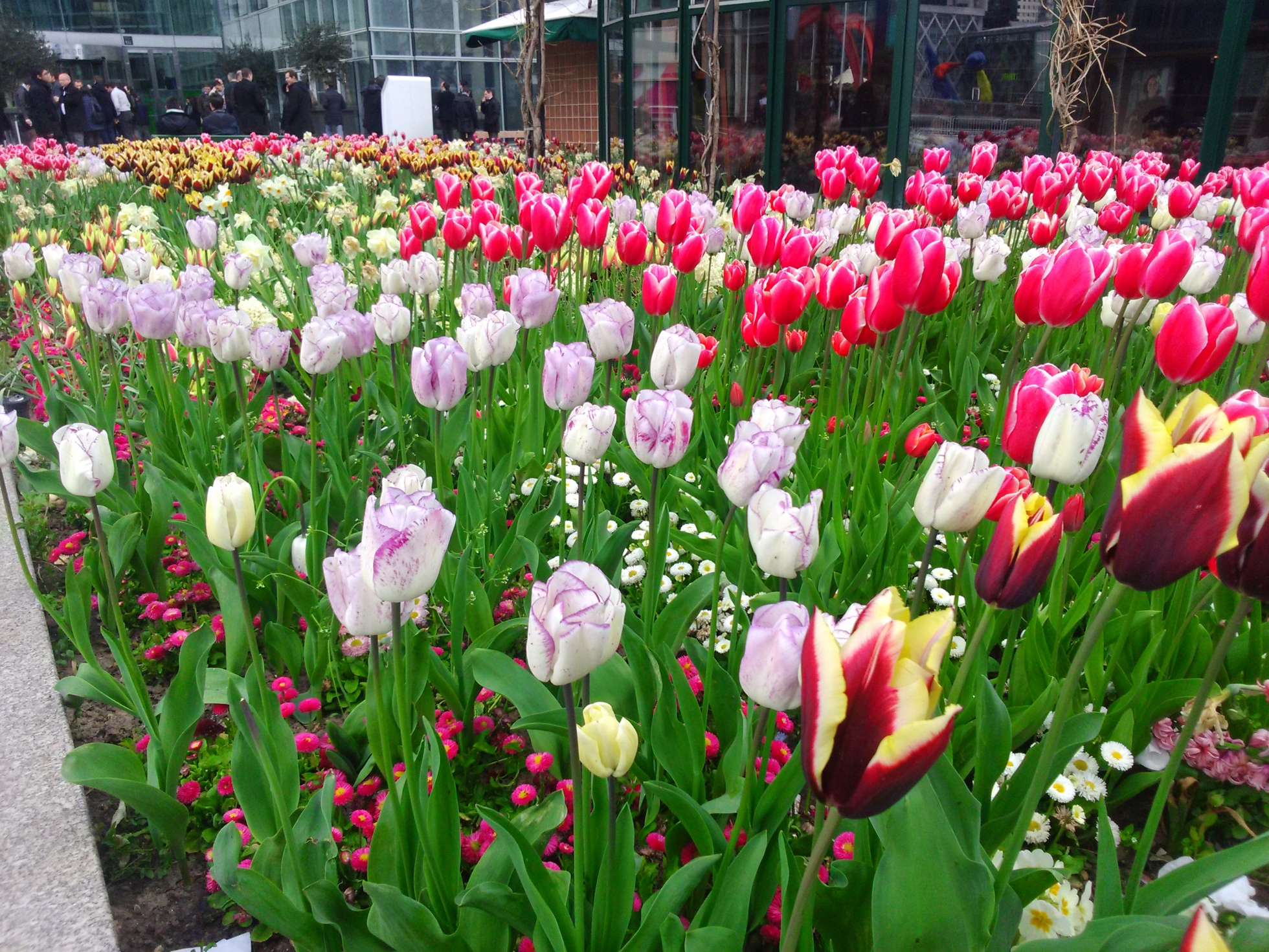 Defacto vous offre des bulbes de tulipes et de jacinthes for Offre espace vert