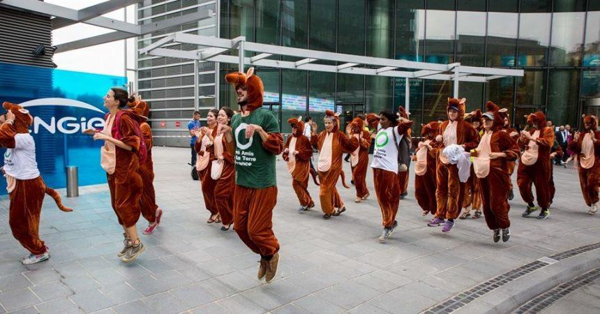Des kangourous s'invitent au siège d'Engie