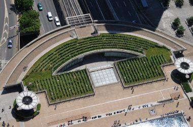 Venez récupérer un pied de vigne de La Défense avant sa disparition