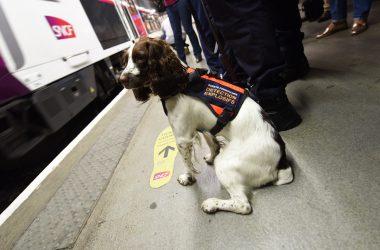 Colis suspects : la SNCF sort ses chiens renifleurs pour limiter les perturbations