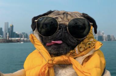 Le chien star Doug the Pug s'invite aux 4 Temps