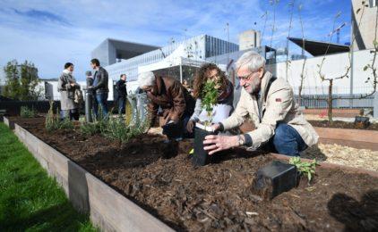 Le jardin partagé des Terrasses Boieldieu attire ses premiers cultivateurs
